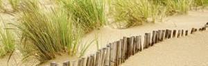 Dune ganivelle et oyats